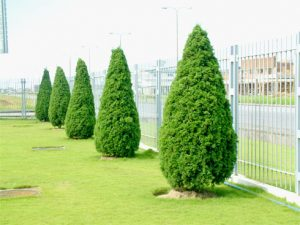 cây xanh ngoại thất
