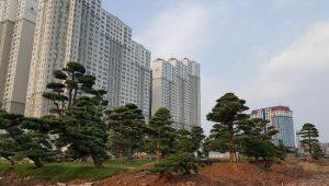 Trồng cây xanh chung cư TIME CITY