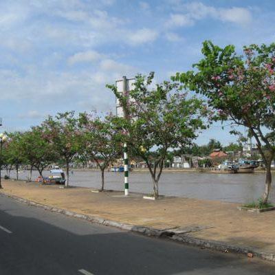 Bán cây Móng Bò công trình