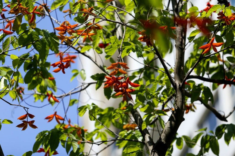Cách trồng cây Sang