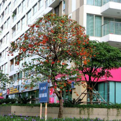 Tại sao nên trồng cây sang công trình?