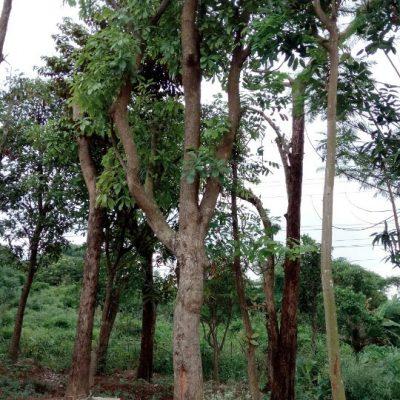 5 Cách trồng cây sang hiệu quả mà ai cũng phải nên đọc