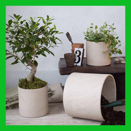 Những ưu điểm vượt trội của chậu sứ trồng cây