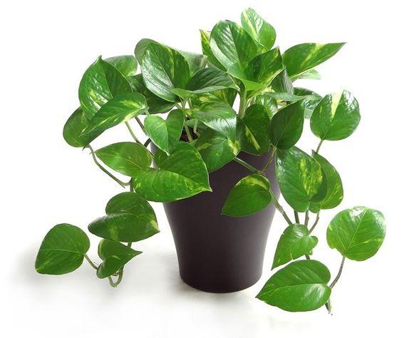 Tuổi Canh Thân nên trồng cây gì?