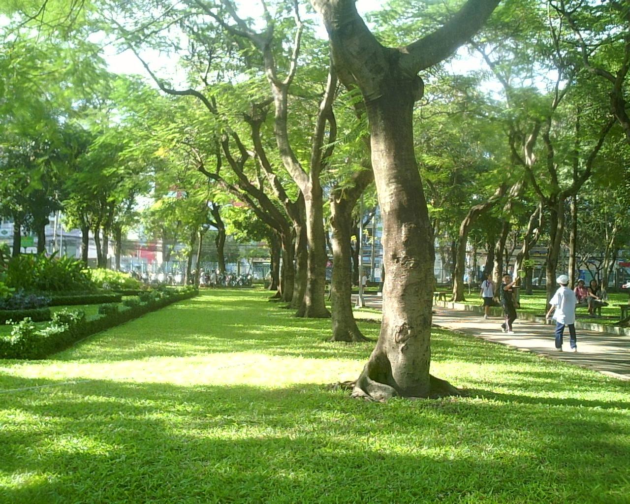 Những cây công trình được ưa chuộng nhất tại Hà Nội