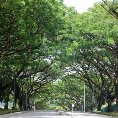 Những cây xanh đô thị được ưa chuộng nhất 2019