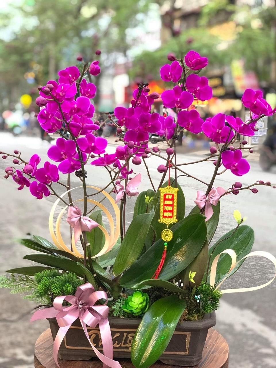 Lan Hồ Điệp Mini- Vẻ đẹp quyến rũ độc đáo