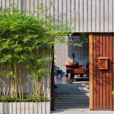 Mua cây trúc cảnh ở đâu tại Hà Nội?