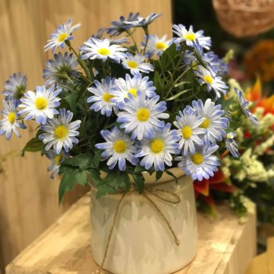 Địa chỉ mua hoa cúc bán Tết 2020 giá rẻ
