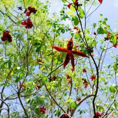 Cách trồng cây Sang đẹp nhất