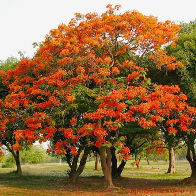 Cung cấp cây xanh công trình toàn quốc Vườn Cây Hòa bình