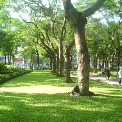 Lợi ích của cây xanh công trình
