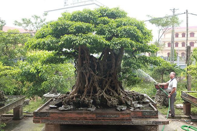 Vườn Cây Hòa Bình Cung Cấp Rất Nhiều Cây Sanh Đẹp