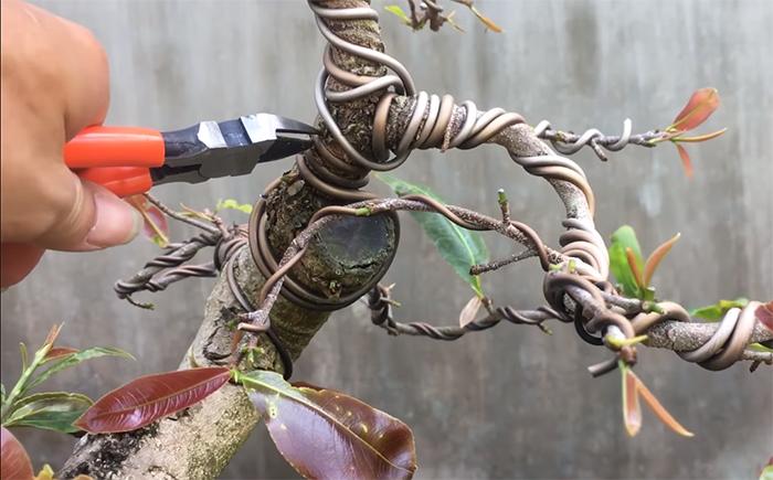 các dụng cụ uốn cây