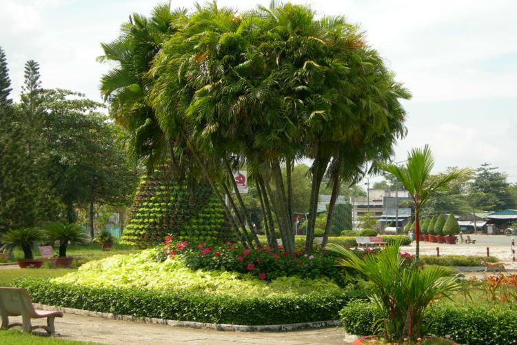 Những loại cây xanh công trình phổ biến hiện nay