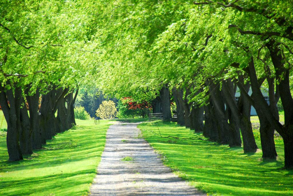 Con đường trải dài cây xanh