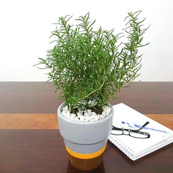 Độ bền của chậu sứ trồng cây