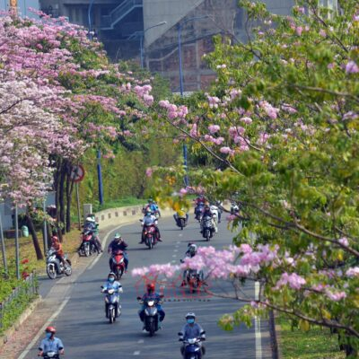 Cây công trình đường phố