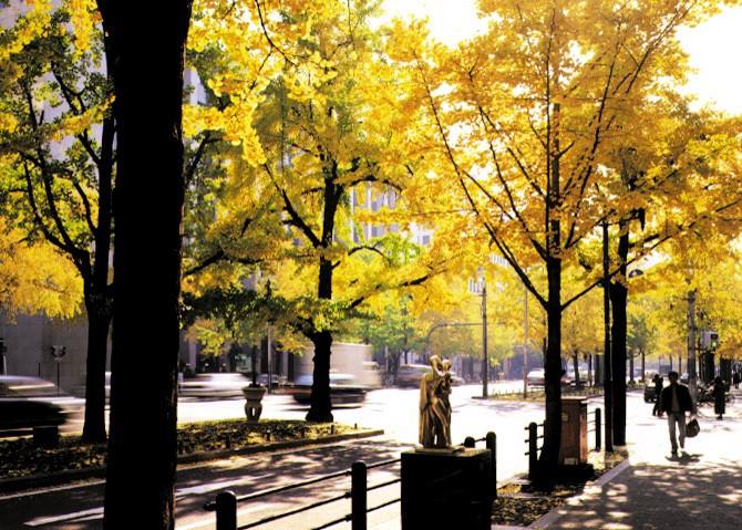 Cây osaka vào mùa thu