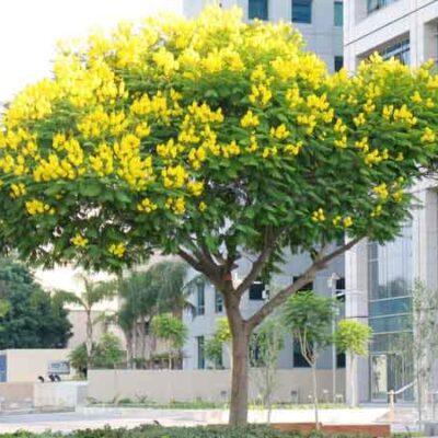 Một cây chuông vàng
