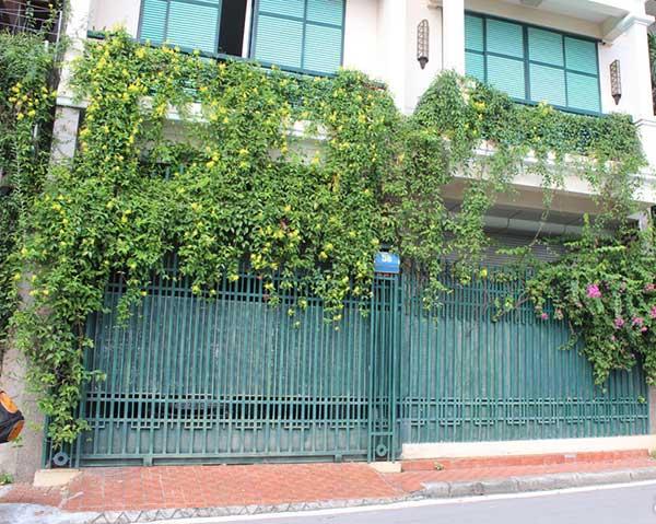 Hoa mai Hoàng Yến Ngoài tác dụng là che nắng, làm mát ngôi nhà vào mùa hè thì cây còn để trang trí cho không gian trở nên thoáng đãng, rực rỡ hơn. Cây thường được trồng tại cổng nhà, sân thượng, ban công.