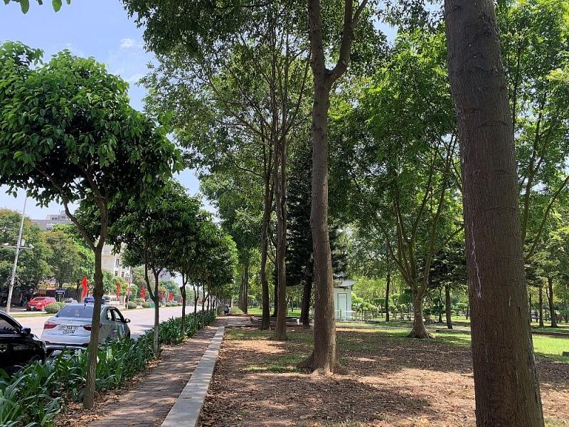 Báo giá cây xanh công trình tại Hà Nội