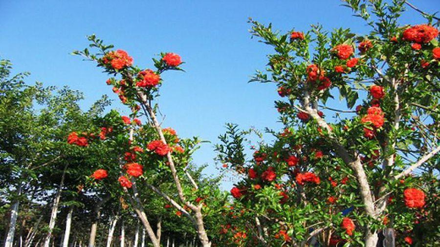 Ý nghĩa của cây lựu hạnh