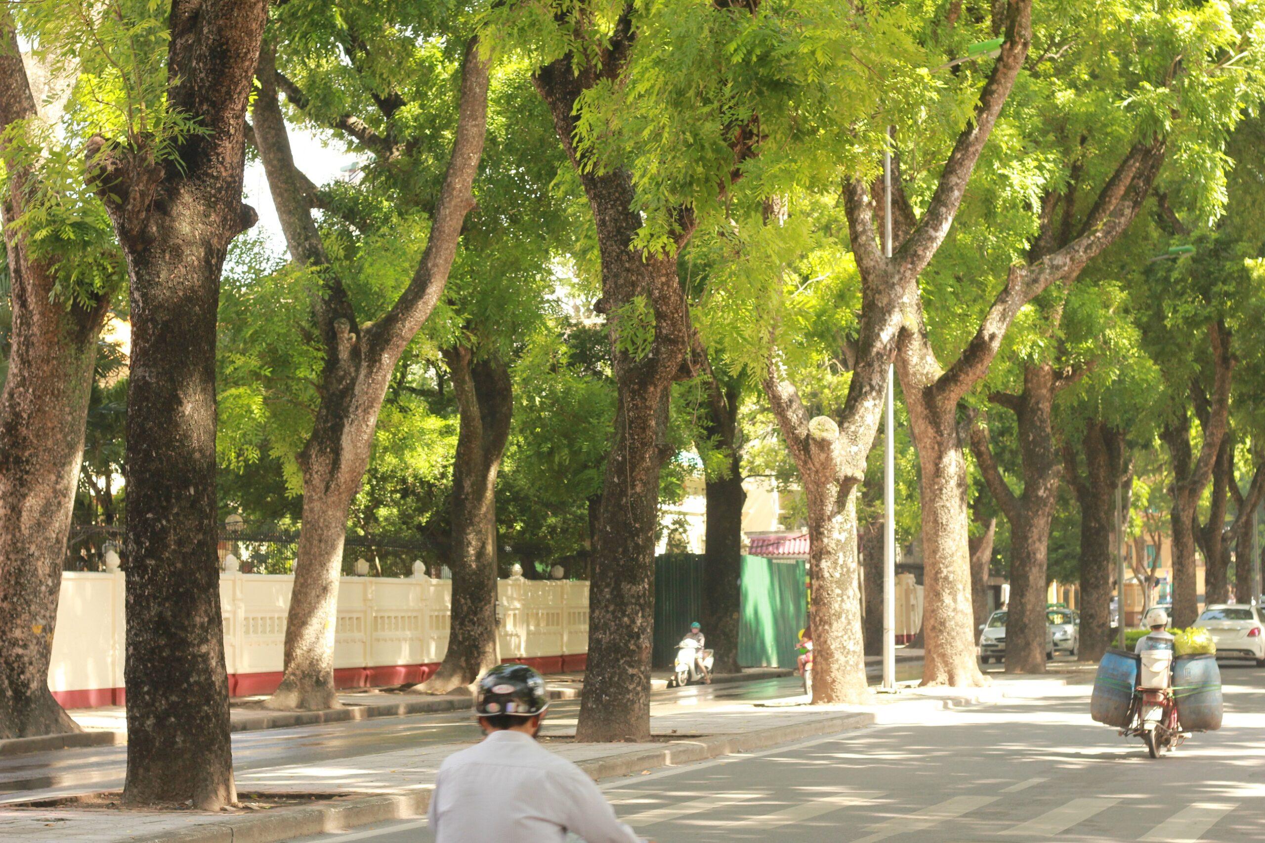 Cây xanh công trình