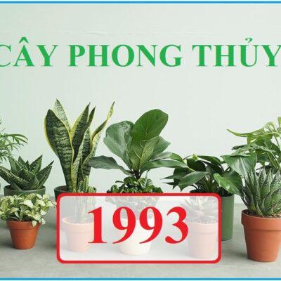 Tuổi 1993 hợp cây phong thủy