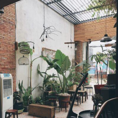 Cây phong thủy quán cafe