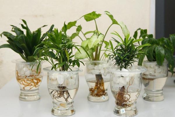 Lợi ích khi trồng cây phong thủy để bàn